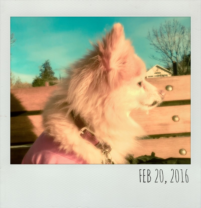 Polaroids - February 20