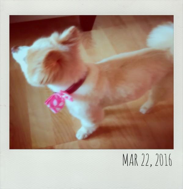 Polaroid March 22